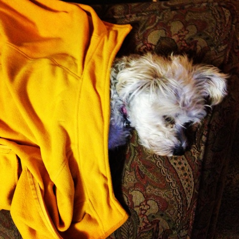 Be like my sweet puppy Sophie. She doesn't worry. Just sit back, relax, and curl up with a jacket :)